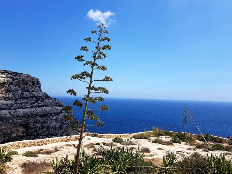 4 rzeczy, które zaskoczą Cię na Malcie