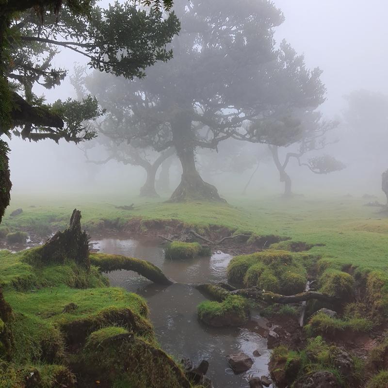 las fanal, las wawrzynowy, Madeira, madera, zwiedzanie Madery, co robić na Maderze