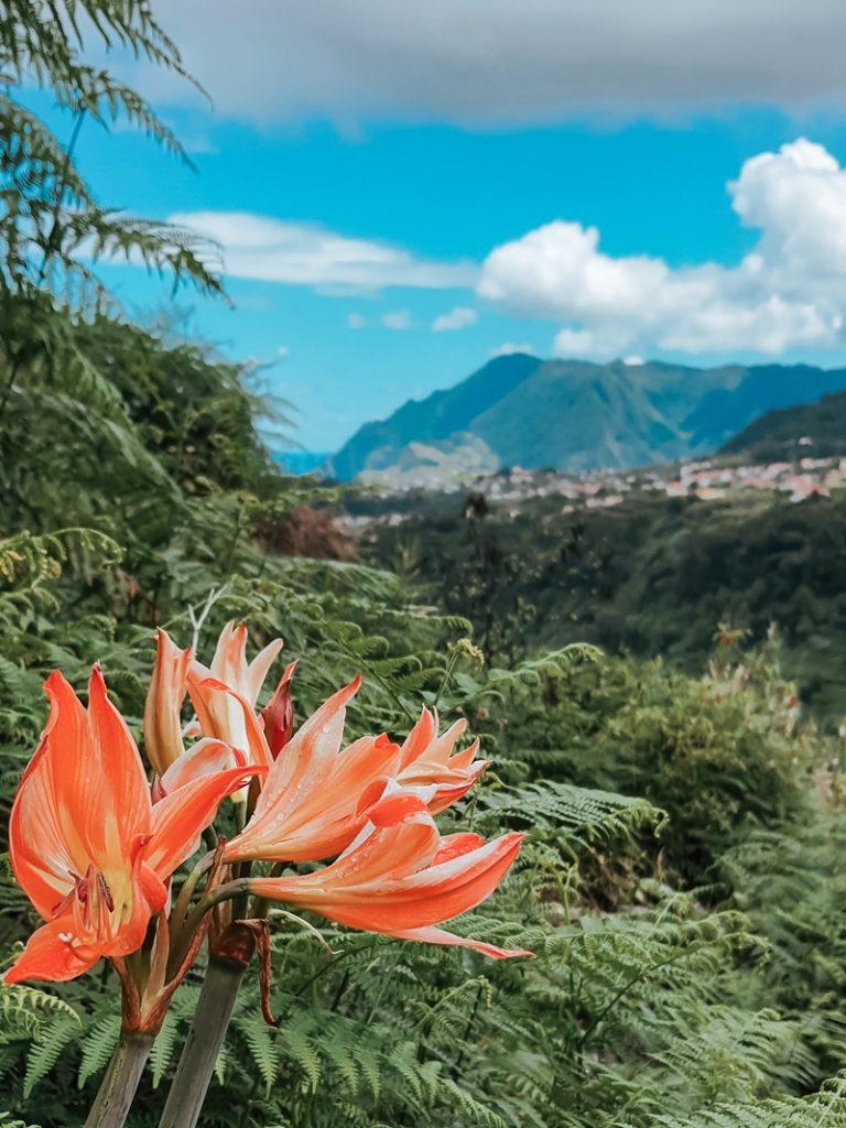 lewady, widok, Madera, wakacje na Maderze